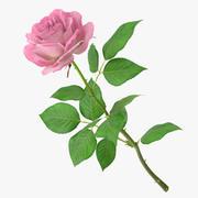 Rosa ros 3d model