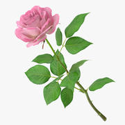Rose rose 3d model