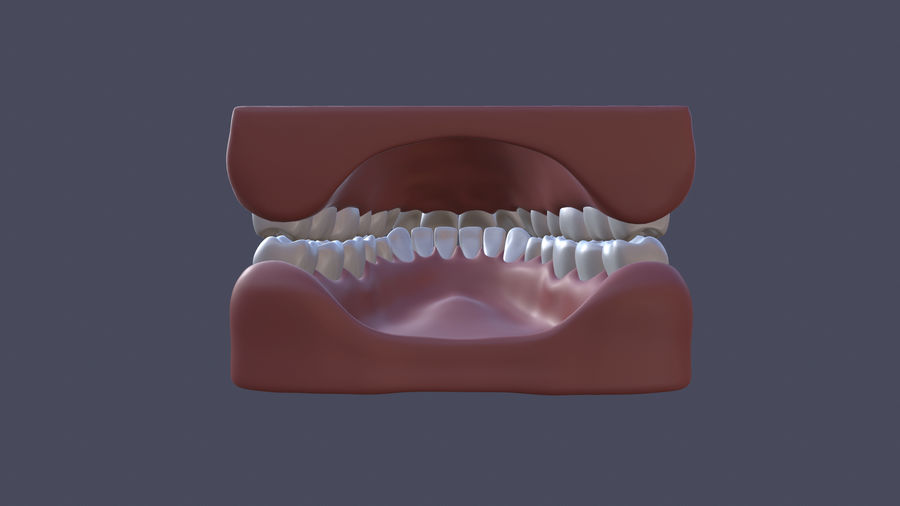 Jaw royalty-free 3d model - Preview no. 5