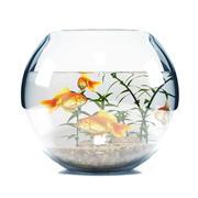 Aquarium  bowl 3d model