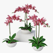 Orchidee impostate 3d model