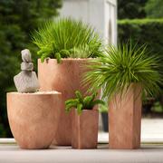 PLANTS 55 3d model