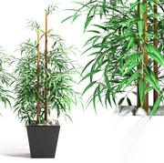 bamboo plant 4 3d model