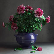 Potted Peonies 3d model