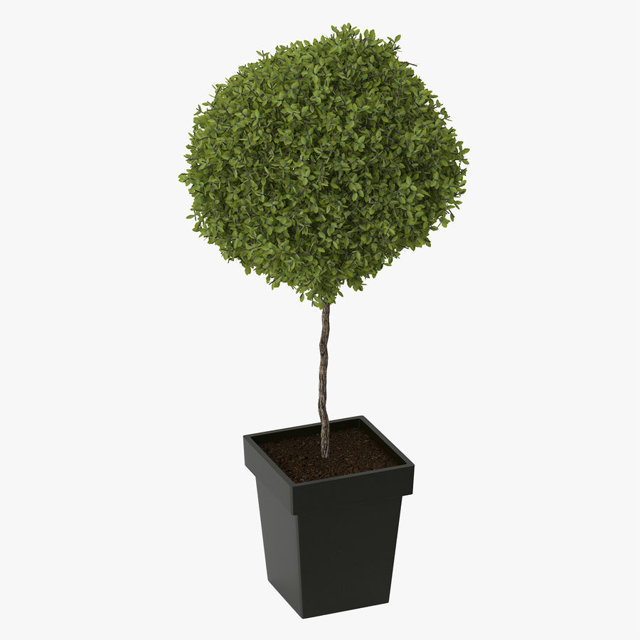 Plant Tree royalty-free 3d model - Preview no. 1