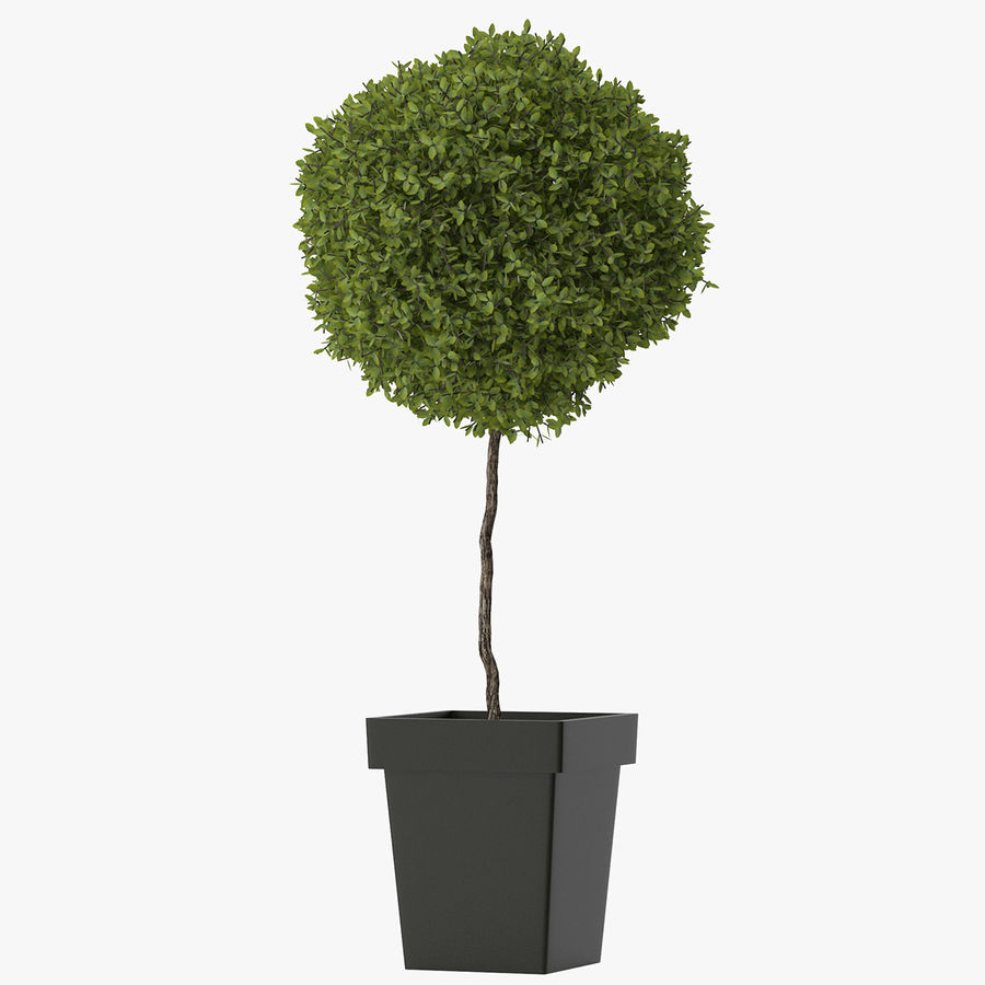 Plant Tree royalty-free 3d model - Preview no. 7