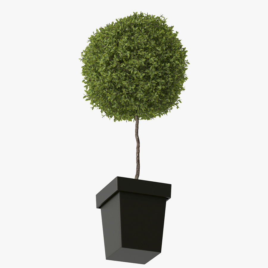 Plant Tree royalty-free 3d model - Preview no. 8