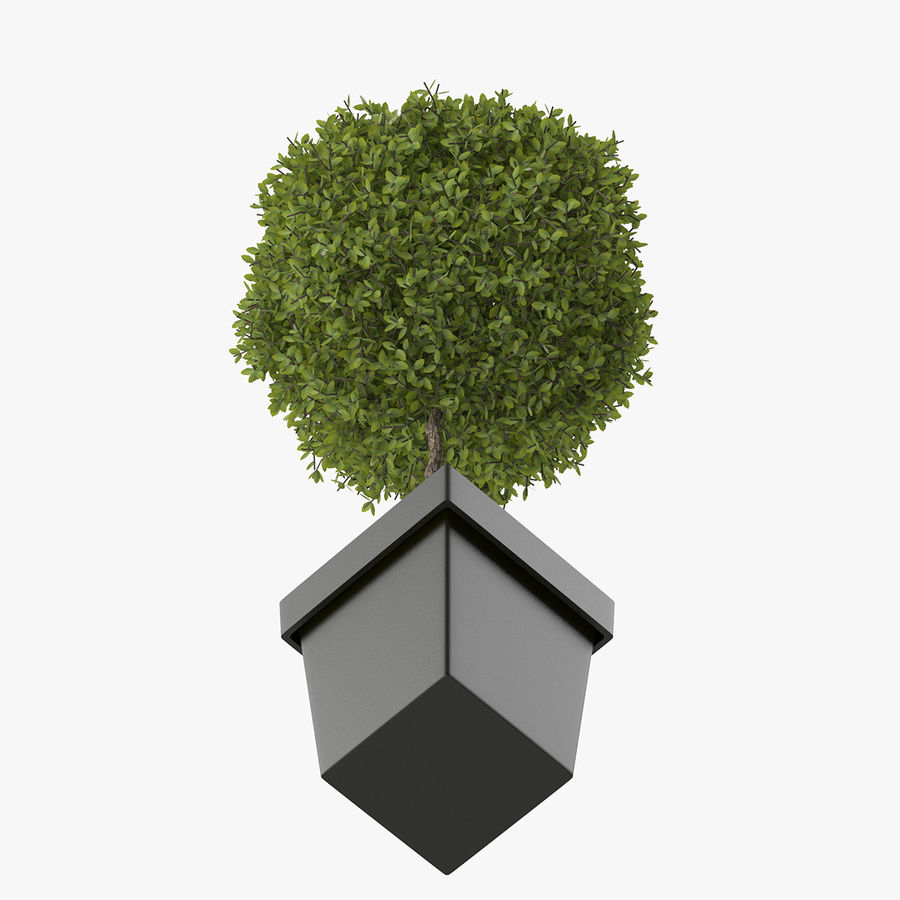 Plant Tree royalty-free 3d model - Preview no. 6