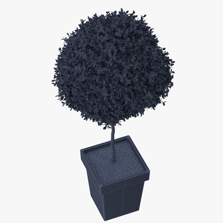 Plant Tree royalty-free 3d model - Preview no. 9