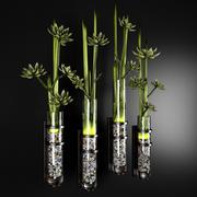 piante decorative 3d model