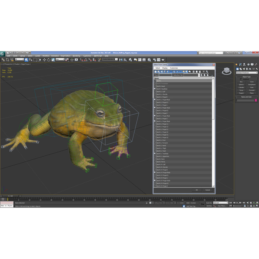 Bullfrog africain truqué royalty-free 3d model - Preview no. 34