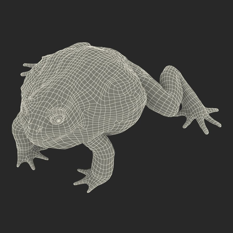 Bullfrog africain truqué royalty-free 3d model - Preview no. 35