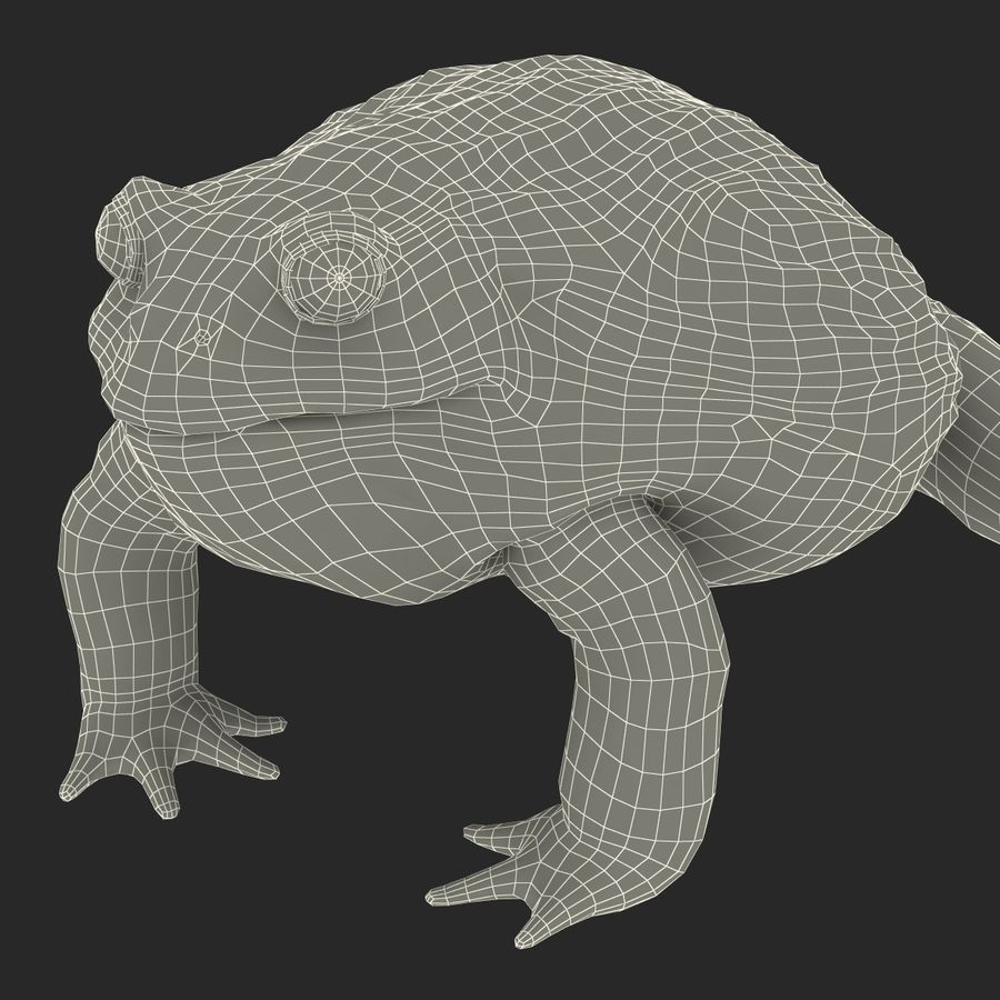 Bullfrog africain truqué royalty-free 3d model - Preview no. 38