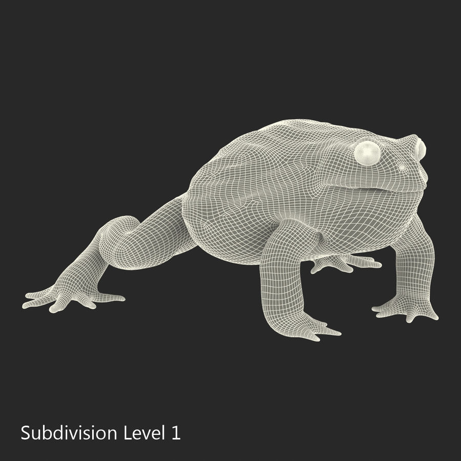 Bullfrog africain truqué royalty-free 3d model - Preview no. 31