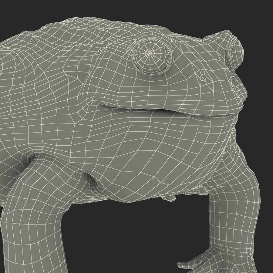 Bullfrog africain truqué royalty-free 3d model - Preview no. 41