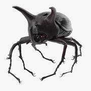 Poza nosorożcem chrząszcz 03 3d model