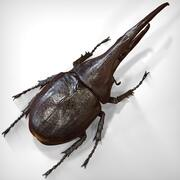 Hercules Beetle 3d model