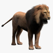 Lion (Fur) 3d model