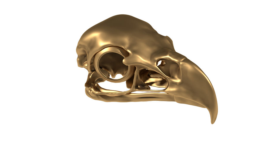 Eagle Skull royalty-free 3d model - Preview no. 2