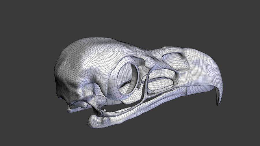 Eagle Skull royalty-free 3d model - Preview no. 15
