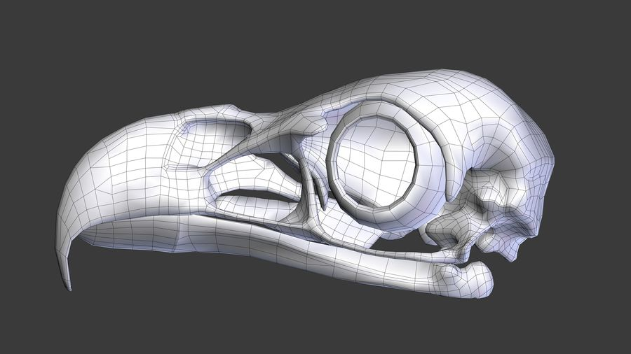 Eagle Skull royalty-free 3d model - Preview no. 5