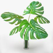 monstera plant_v3 3d model
