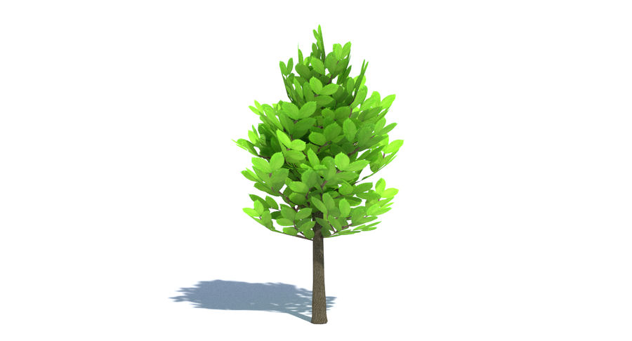 Cartoon Tree Small royalty-free 3d model - Preview no. 7