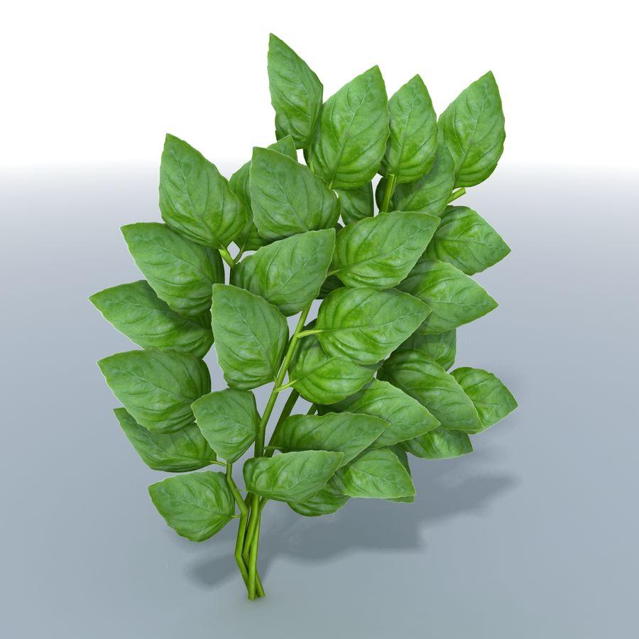 Basil Herb royalty-free 3d model - Preview no. 3