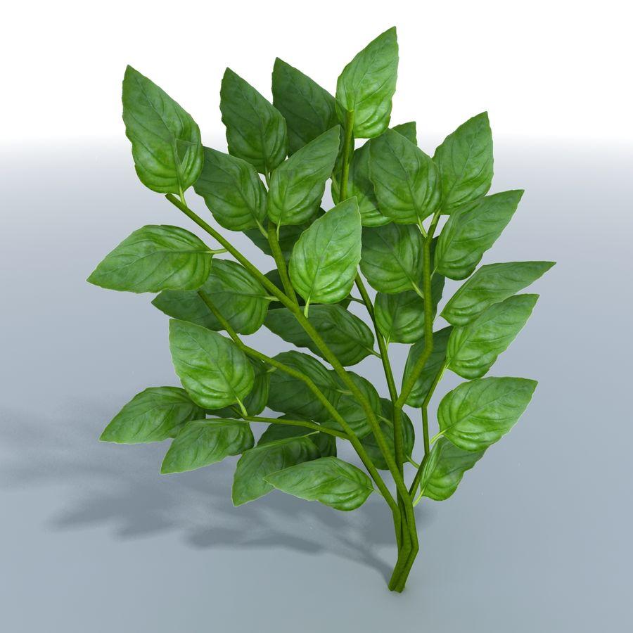 Basil Herb royalty-free 3d model - Preview no. 4