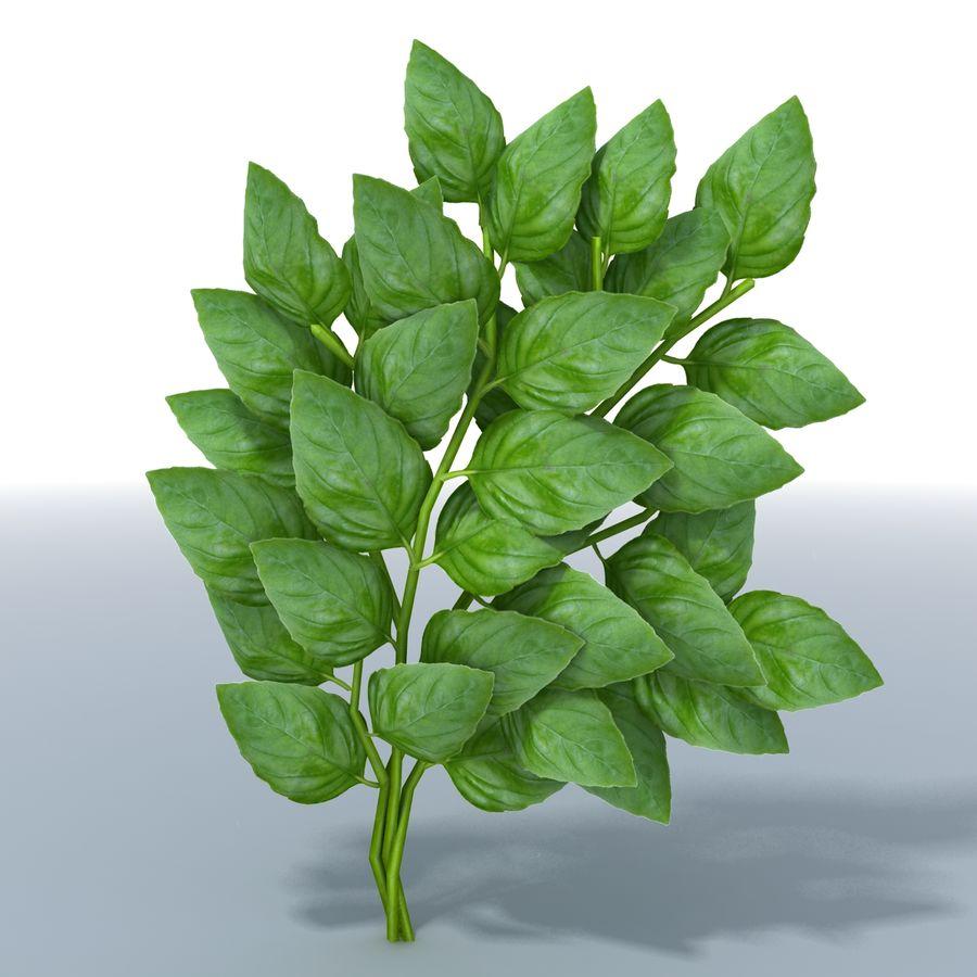 Basil Herb royalty-free 3d model - Preview no. 1