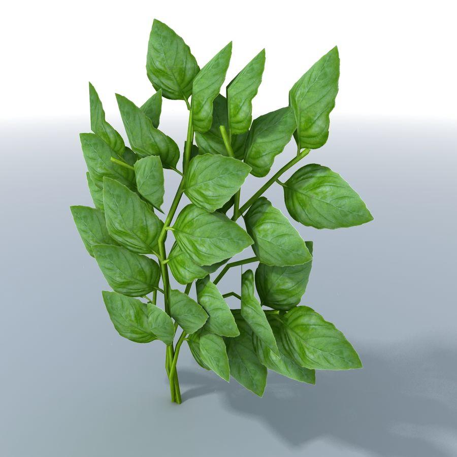 Basil Herb royalty-free 3d model - Preview no. 2