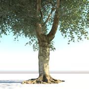 本物の古い木 3d model