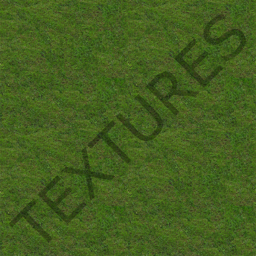 Fescue Grass royalty-free 3d model - Preview no. 14