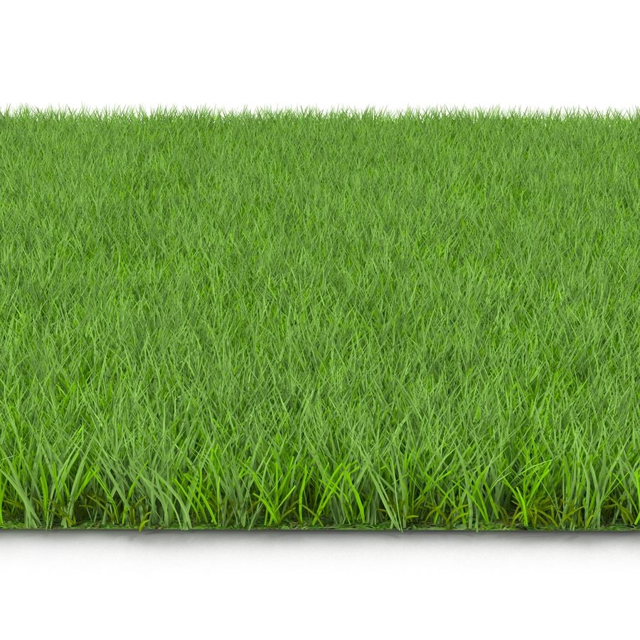 Fescue Grass royalty-free 3d model - Preview no. 4