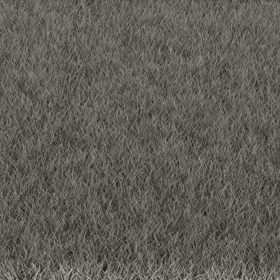 Fescue Grass royalty-free 3d model - Preview no. 19
