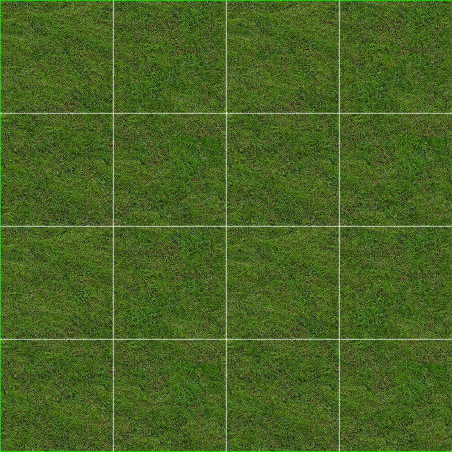 Fescue Grass royalty-free 3d model - Preview no. 12