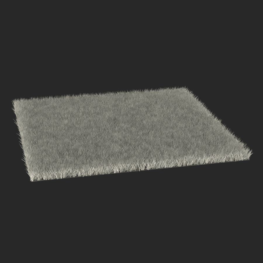 Fescue Grass royalty-free 3d model - Preview no. 16