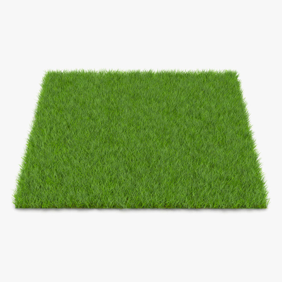 Fescue Grass royalty-free 3d model - Preview no. 1