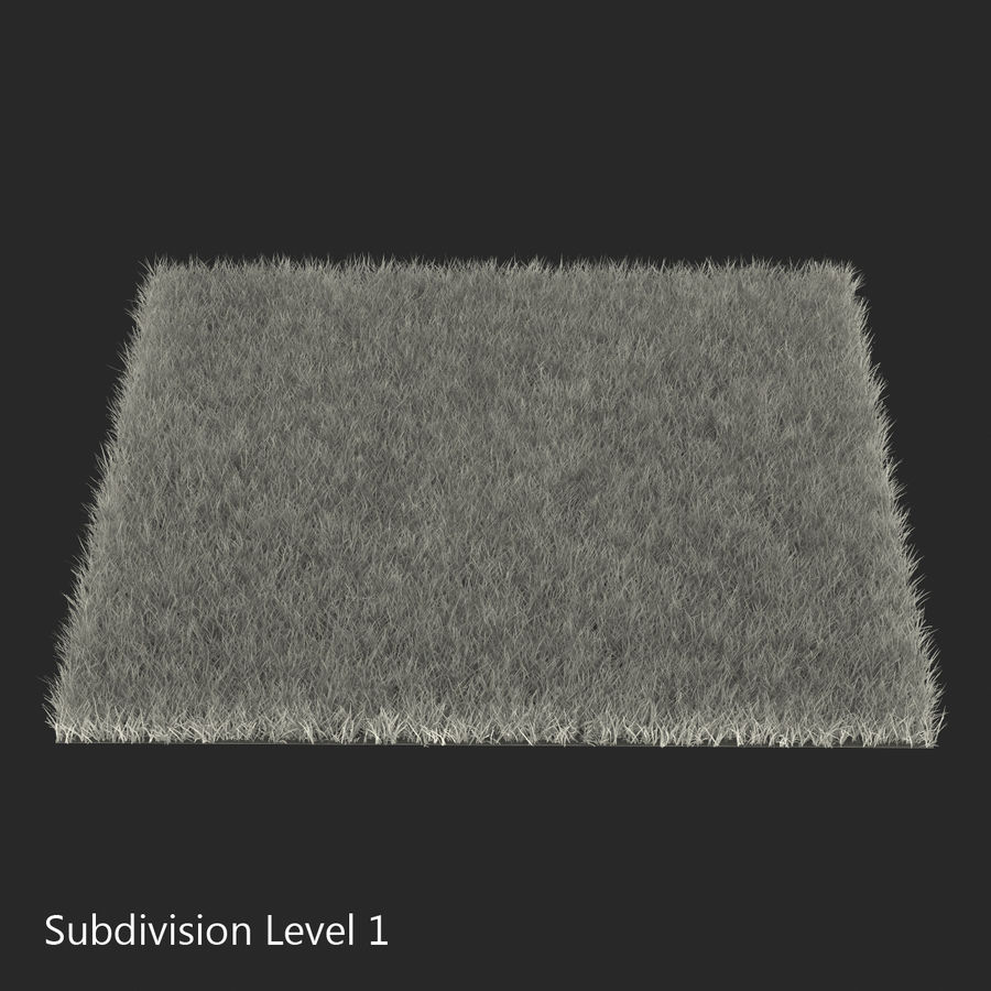 Fescue Grass royalty-free 3d model - Preview no. 11