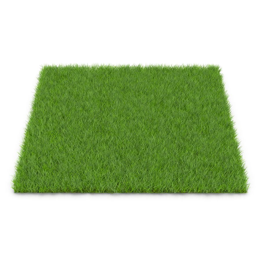 Fescue Grass royalty-free 3d model - Preview no. 2