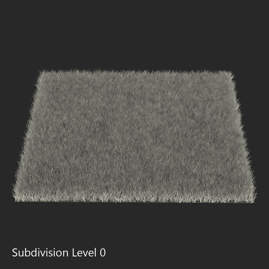 Fescue Grass royalty-free 3d model - Preview no. 10