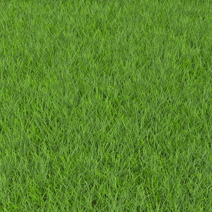 Fescue Grass royalty-free 3d model - Preview no. 5