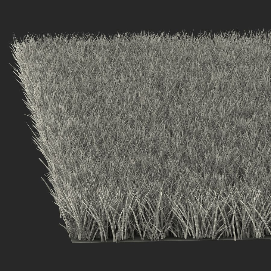 Fescue Grass royalty-free 3d model - Preview no. 18