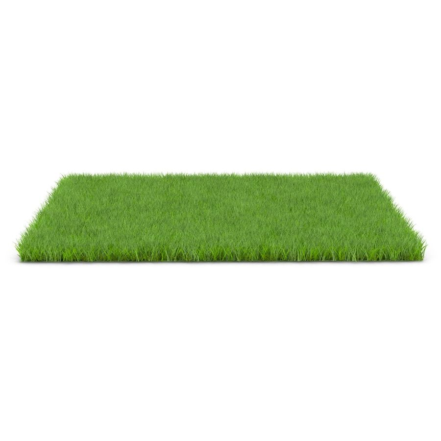 Fescue Grass royalty-free 3d model - Preview no. 3