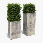Boxwood Shrubs in Column Pots 3d model