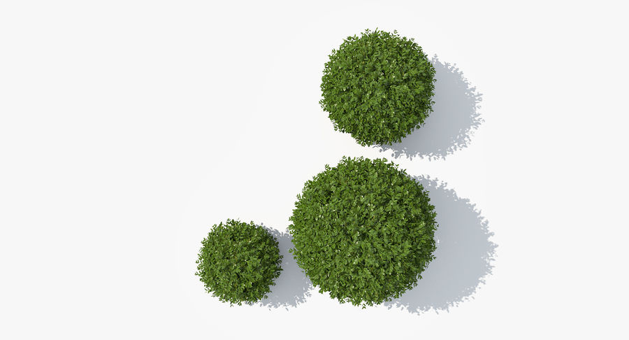 3 Boxwood Balls Set royalty-free 3d model - Preview no. 6