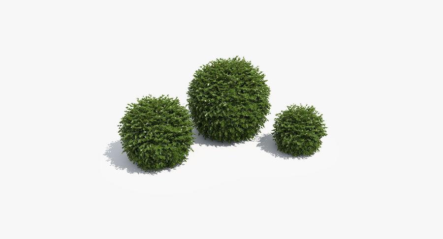 3 Boxwood Balls Set royalty-free 3d model - Preview no. 3