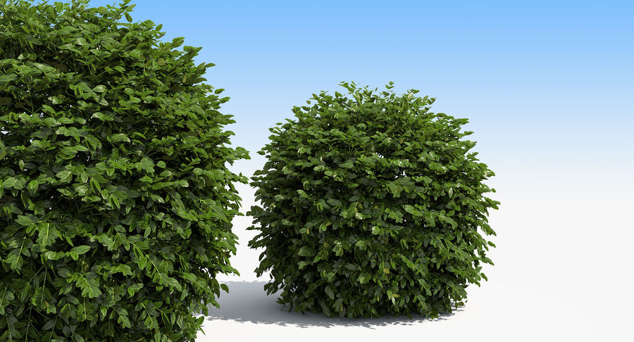 3 Boxwood Balls Set royalty-free 3d model - Preview no. 7