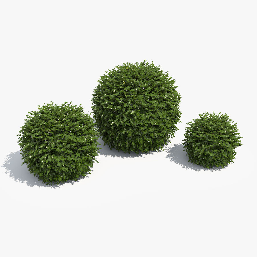 3 Boxwood Balls Set royalty-free 3d model - Preview no. 1