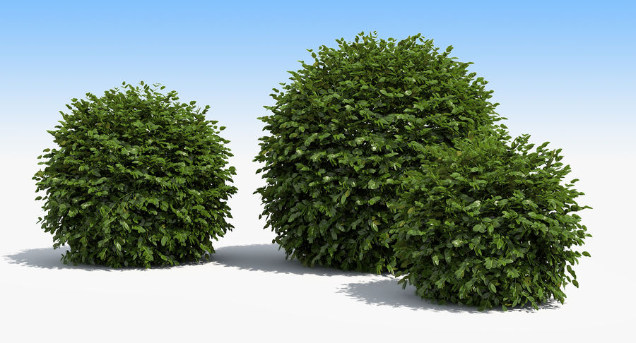3 Boxwood Balls Set royalty-free 3d model - Preview no. 5